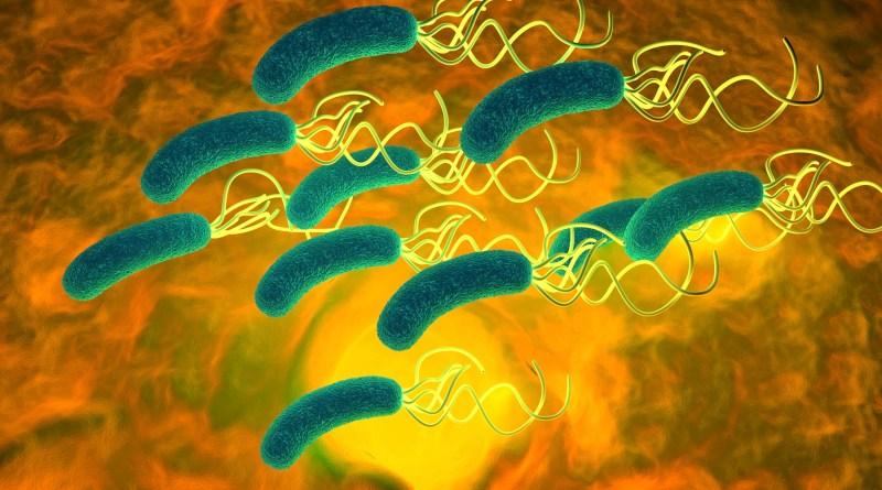 La bacteria Helicobacter pylori causa el 90 % de casos de cáncer de estómago, que sumado entre hombres y mujeres, es la mayor causa de muerte oncológica en muchos países.