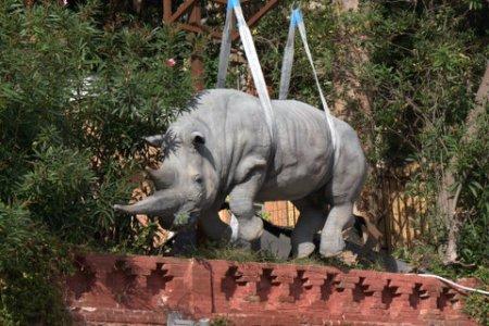 Italian rhino