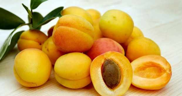 Абрикос - польза и лечебные свойства. Народные рецепты