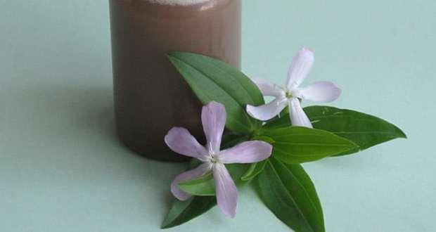 Мыльнянка - лечебные свойства и применение в народной медицине