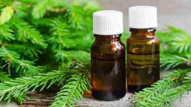 Пихта - состав, лечебные свойства и применение
