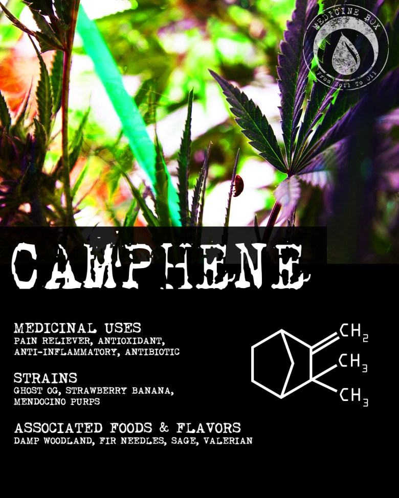 medicine box terpene tuesday camphene
