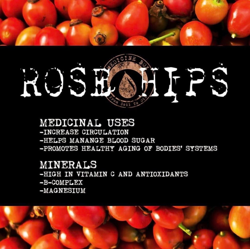 therapeutic uses rose hips