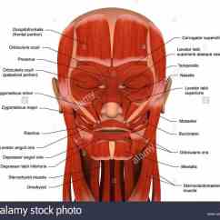 Face Muscles Diagram Wiring Maker Labeling Facial Medicinebtg