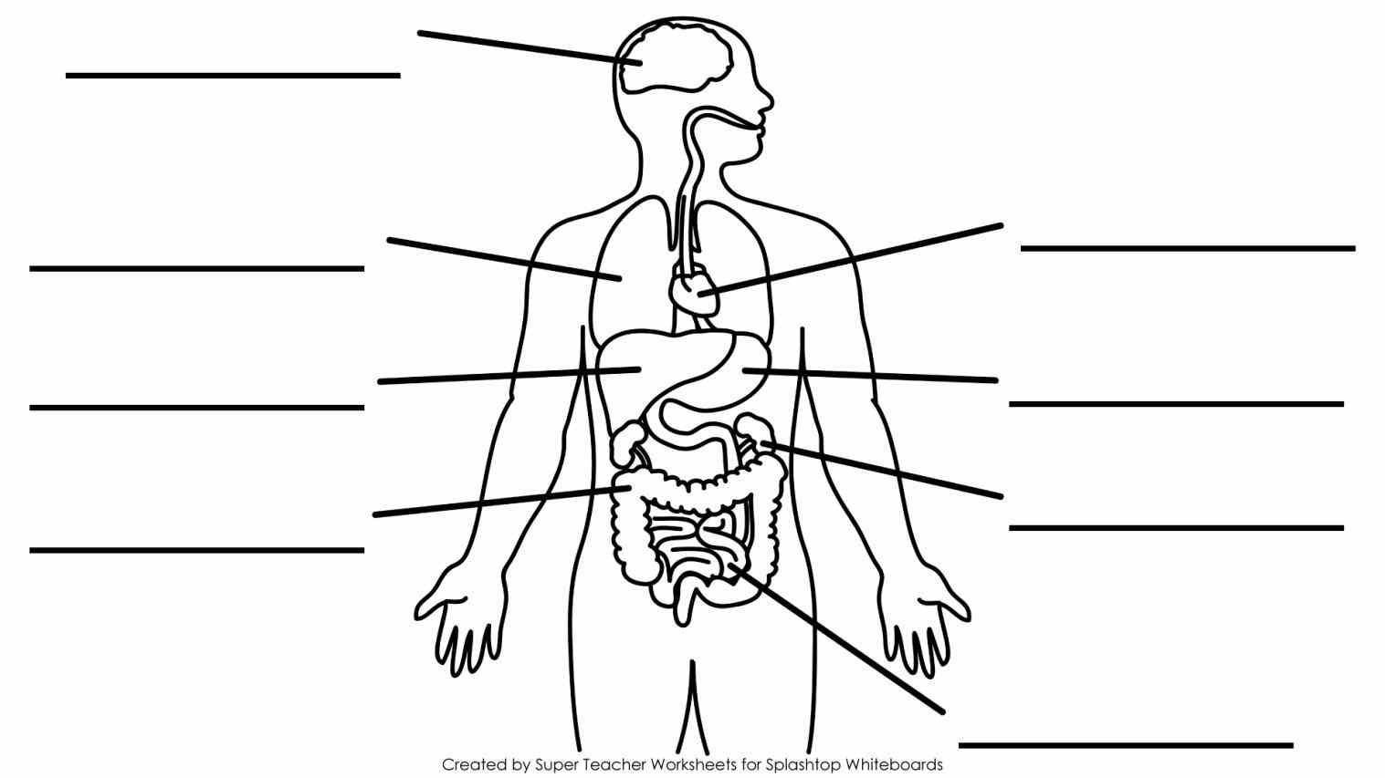 Diagram Of The Human Body With Labels