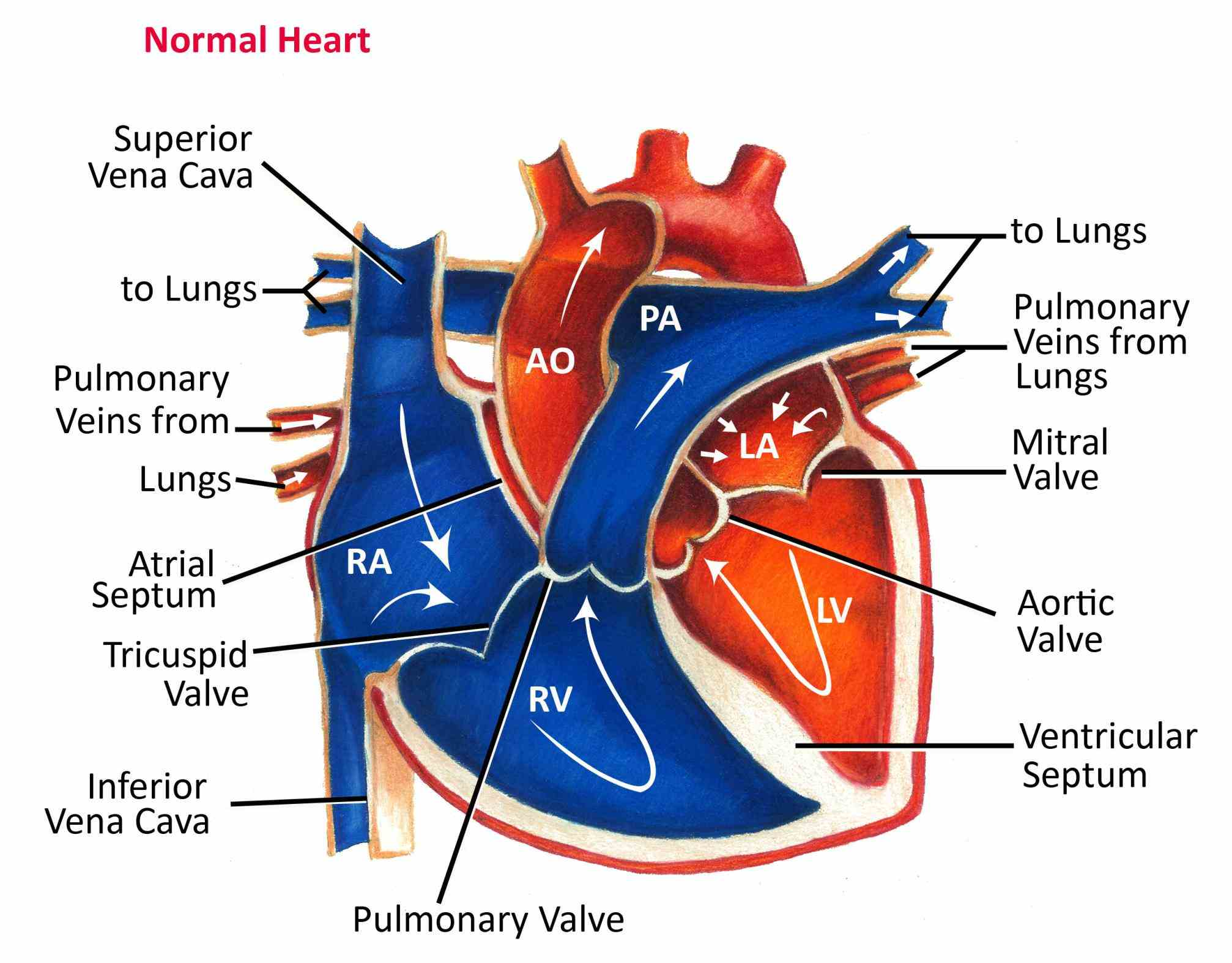 cardiac arteries diagram general electric refrigerators that oxygenated from lungs passes major and gets