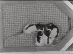 Four-huddled