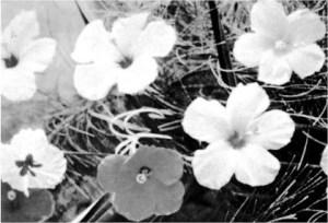 flowers2b