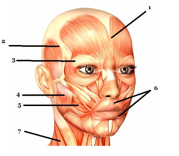 Facial Muscles Image based question on NEET PG