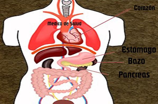Estómago y de en el espalda dolor la el lado izquierdo