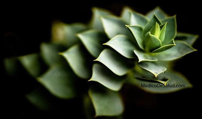Beneficios del Aloe Vera: curación de la piel, estreñimiento y sistema inmune beneficios del aloe vera: curación de la piel, estreñimiento y sistema inmune Beneficios del Aloe Vera: curación de la piel, estreñimiento y sistema inmune Screenshot 38 7