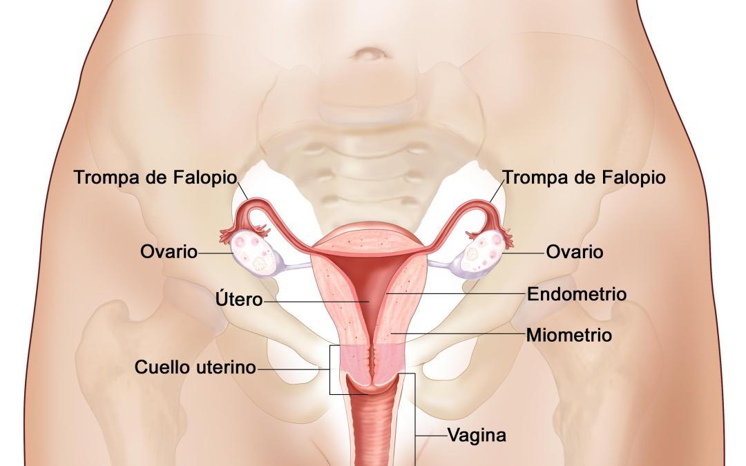 Es posible revertir la esterilización femenina