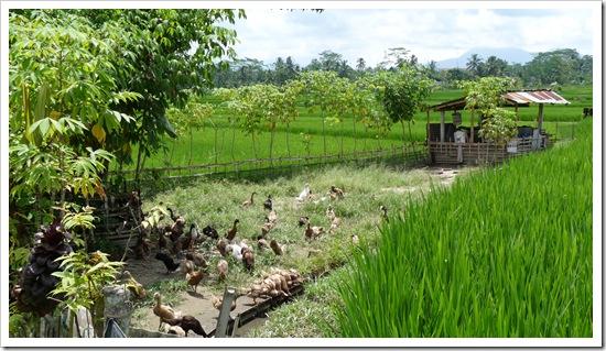 2011-03-20 Bali 057