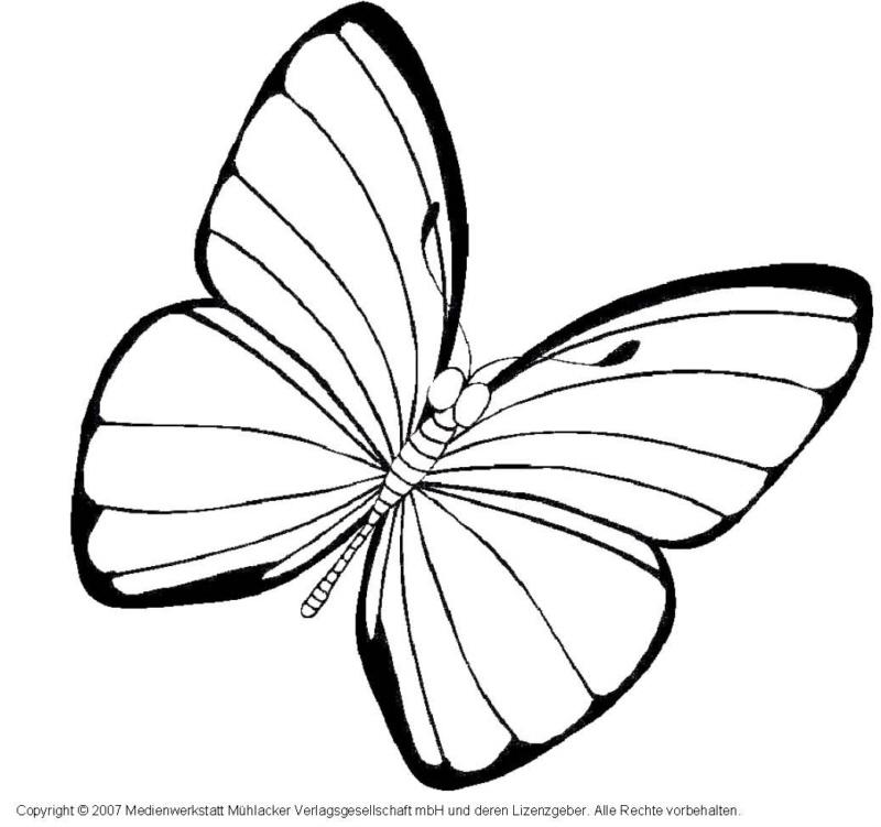 Schmetterling 6  MedienwerkstattWissen  20062017