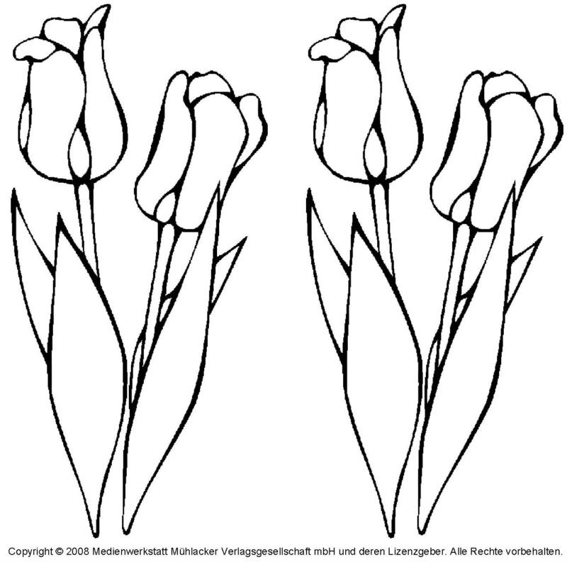 Malvorlage Tulpe Kostenlos