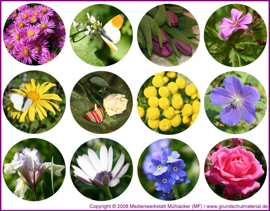 Blumenfotos Zum Ausdrucken