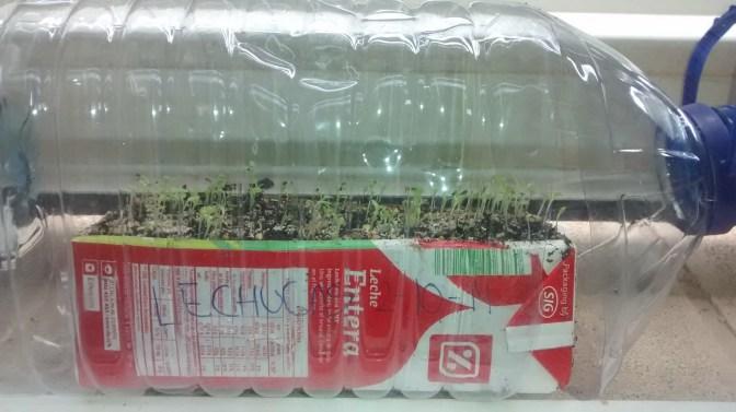semillero-e-invernadero-botella