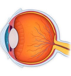 inner eye diagram label [ 1200 x 1200 Pixel ]