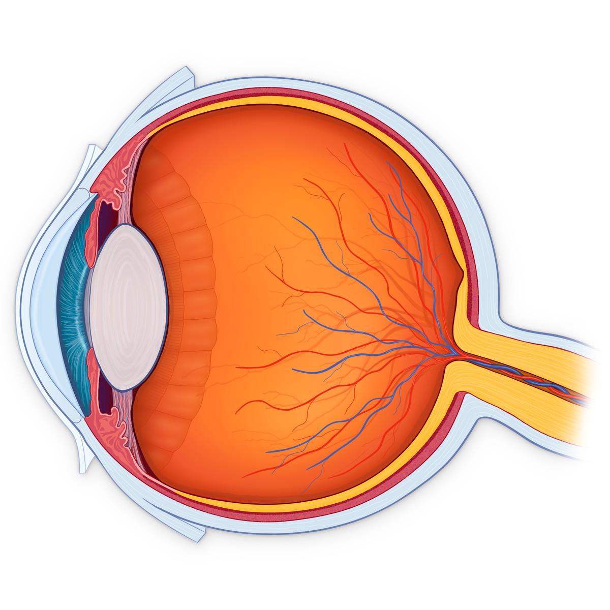 hight resolution of inner eye diagram label