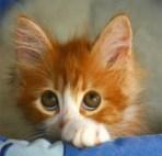 lindo-gatito.jpg_400