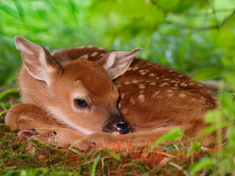 Fondos de pantalla de animales tiernos - Medioambiente y ...