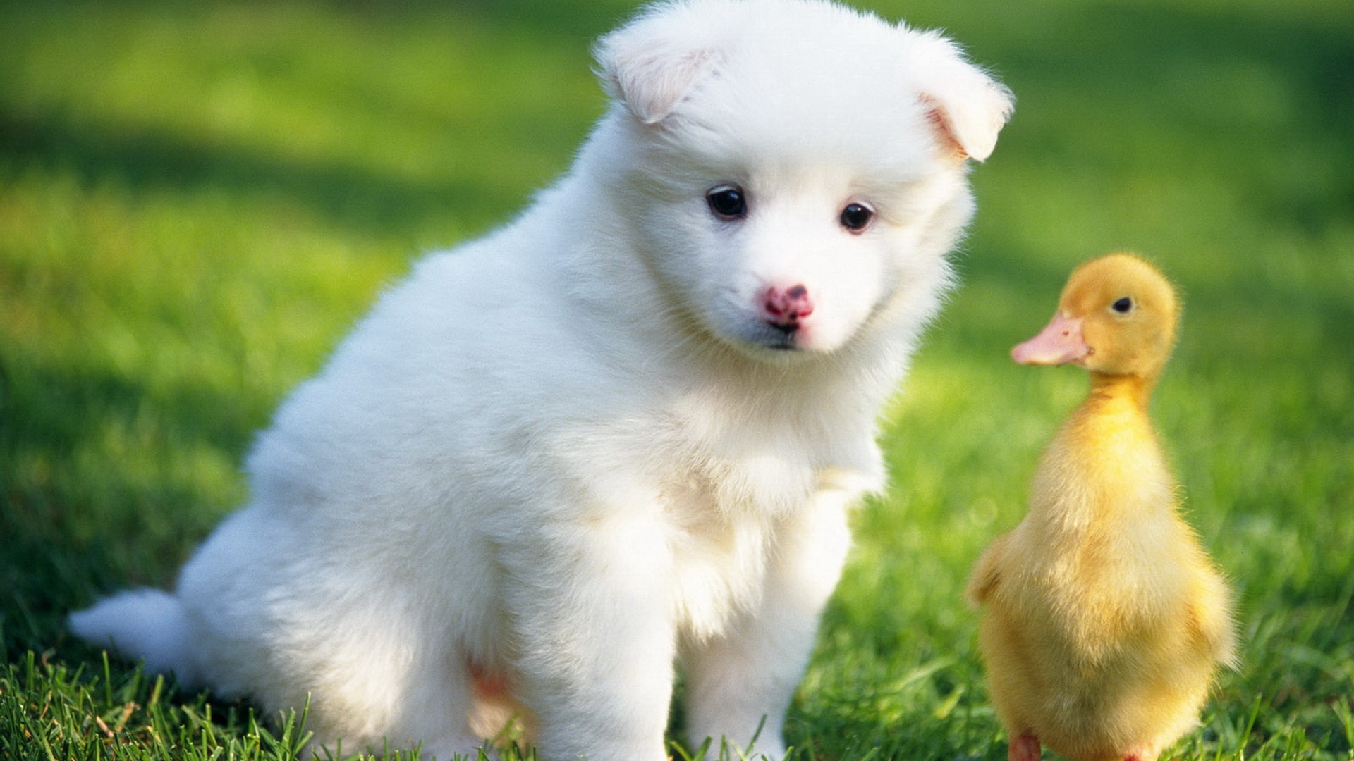 Animales: Fondos De Pantalla De Animales