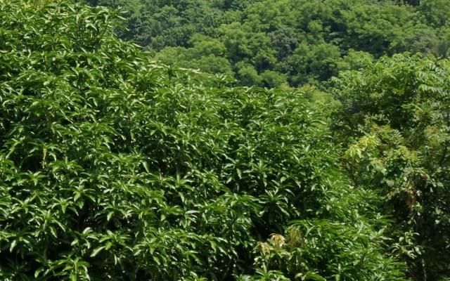 Fondos de pantalla de flora y vegetación af