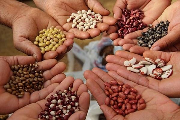 Qué son los bancos de germoplasma o bancos de semillas