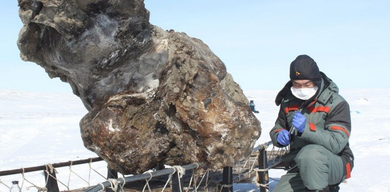 Mamut de la tundra
