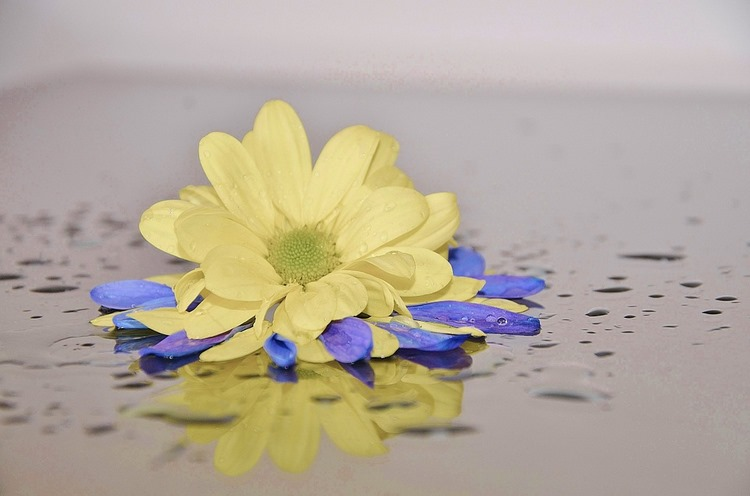 Cómo fabricar flores preservadas