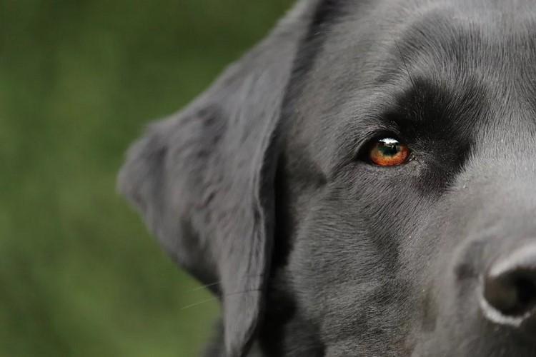 La incineración de mascotas como alternativa para tenerlos siempre a tu lado