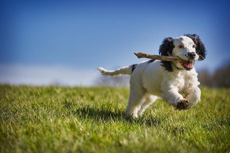 Cómo educar a un perro - Consejos para su educación básica