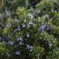 La importancia de las especies autóctonas para fomentar la biodiversidad en el jardín