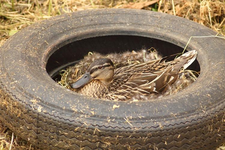 Ideas creativas para reciclar neumáticos viejos