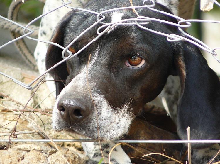 Cómo detectar y ayudar a un perro con miedo