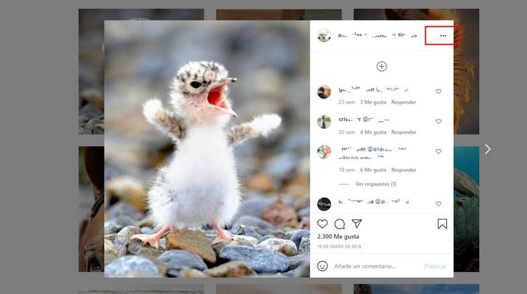 iGram, la herramienta que te permite descargar vídeos de Instagram