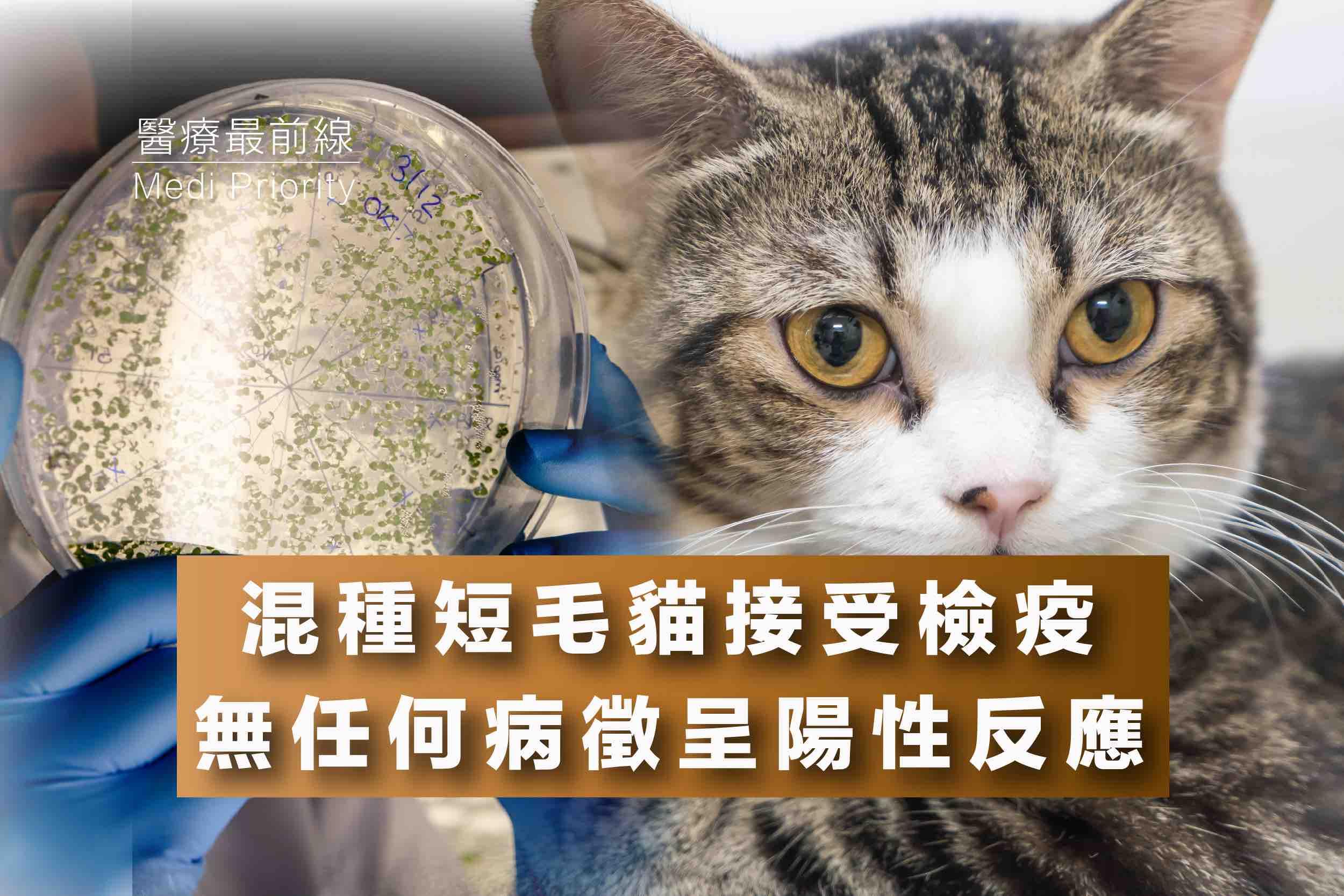 【混種短毛貓接受檢疫】無任何病徵呈陽性反應