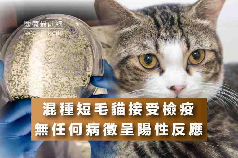 Read more about the article 【混種短毛貓接受檢疫】無任何病徵呈陽性反應