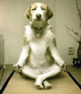 Cute-Funny-Dog-2012-05