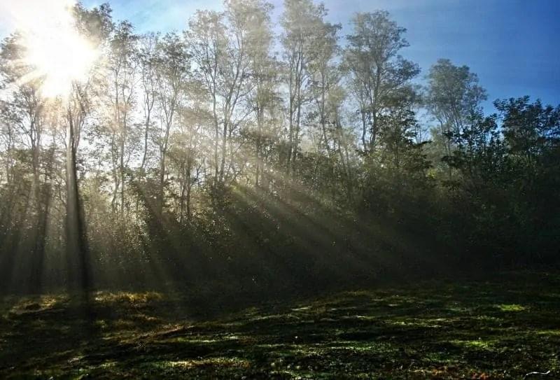 mist-481710_1280.jpg