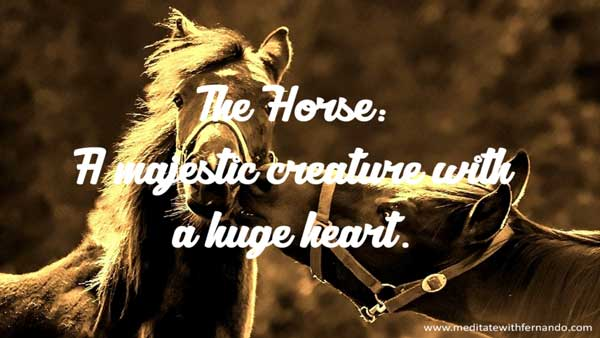 The horse has a powerful heart chakra.