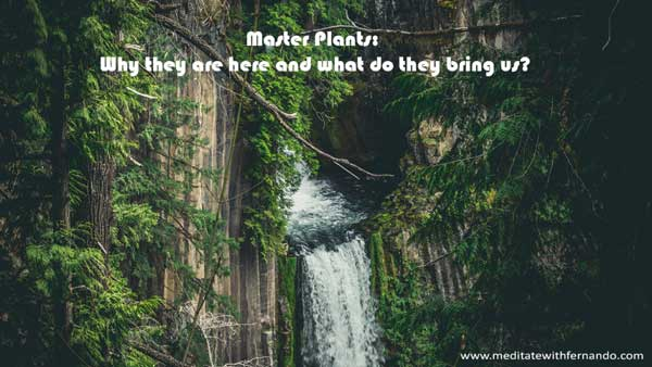 Master plants are also powerful teachers and healers.