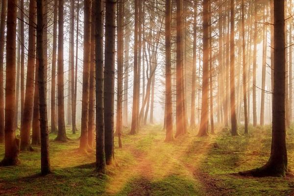 Stage de méditation de pleine conscience automne