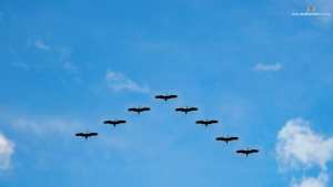 Wallpaper - Flying Birds - Desktop