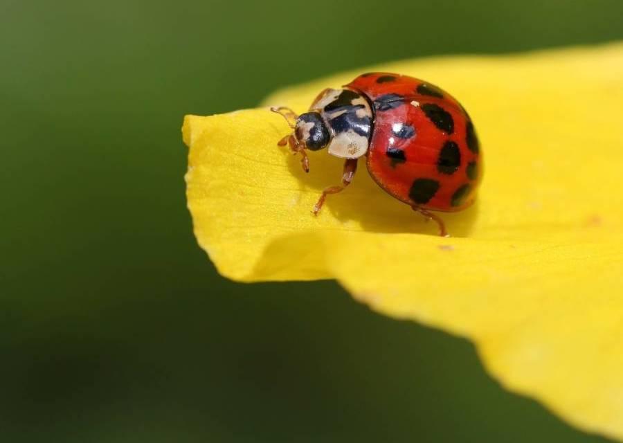 The Beetle Theory