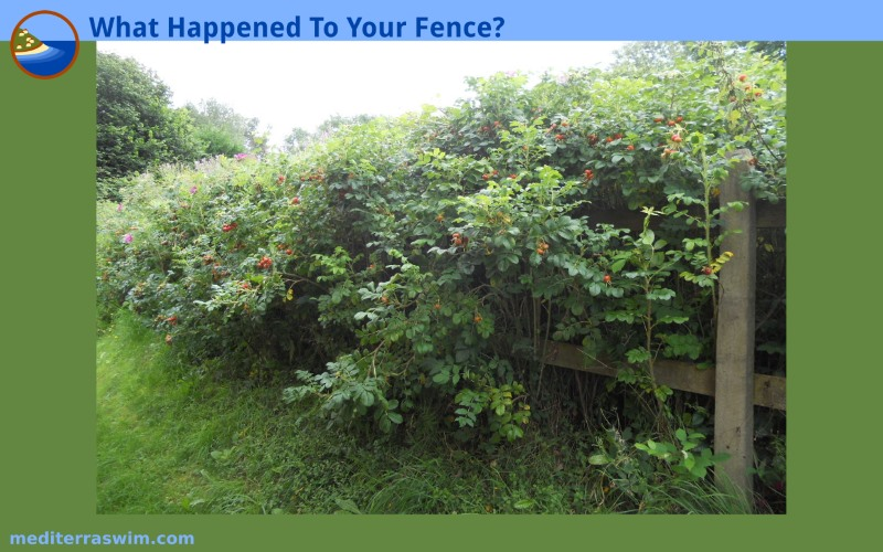 1608 IMAGE what happen fence 800x500