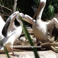 sd birds