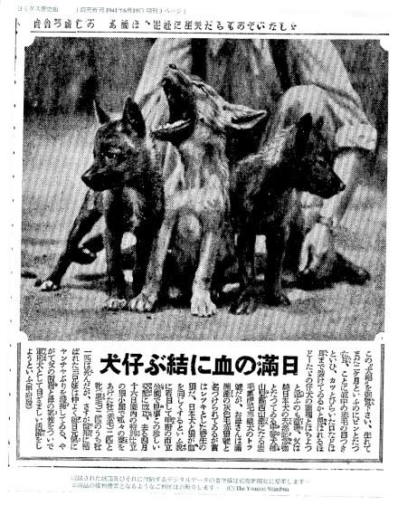 19410619-manchuwolf
