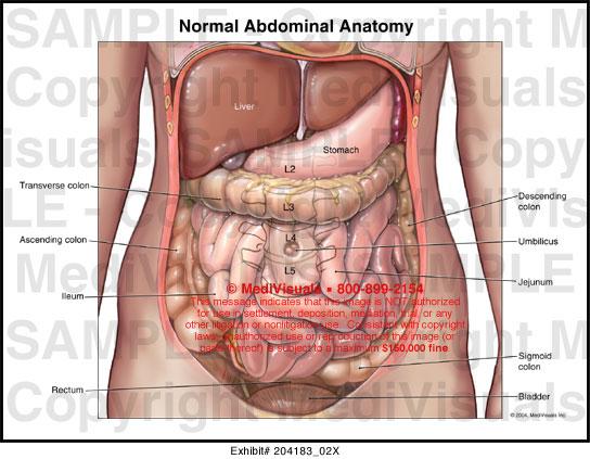 ear anatomy diagram labeled msd 6al wiring hei normal abdominal medical exhibit