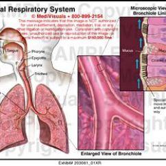 Knee Diagrams Anatomy Of A 1999 Ford Explorer Radio Wiring Diagram Medivisuals Normal Respiratory System Medical Illustration